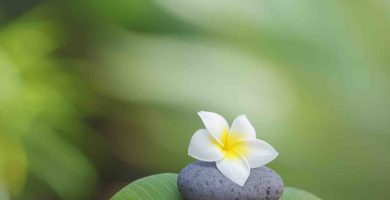 Pebble Stones and Flower in Tropical Garden
